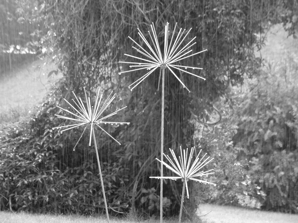 Rain-Alliums-Bw